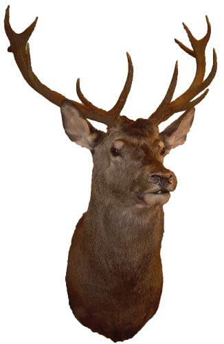 Utstoppet hjort fra Villmarksprodukt